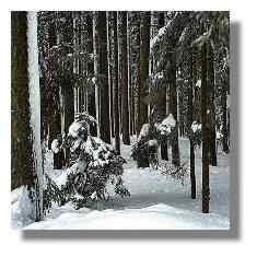 [Foto:winter.jpg]